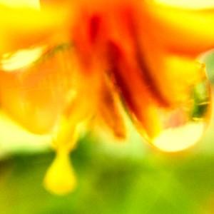 Heady with Nectar