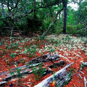 Sponge Forest
