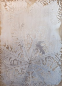 Whitebark-Magnolia